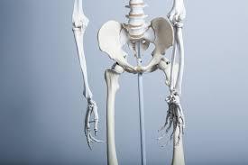 全身の骨格からみる骨盤矯正